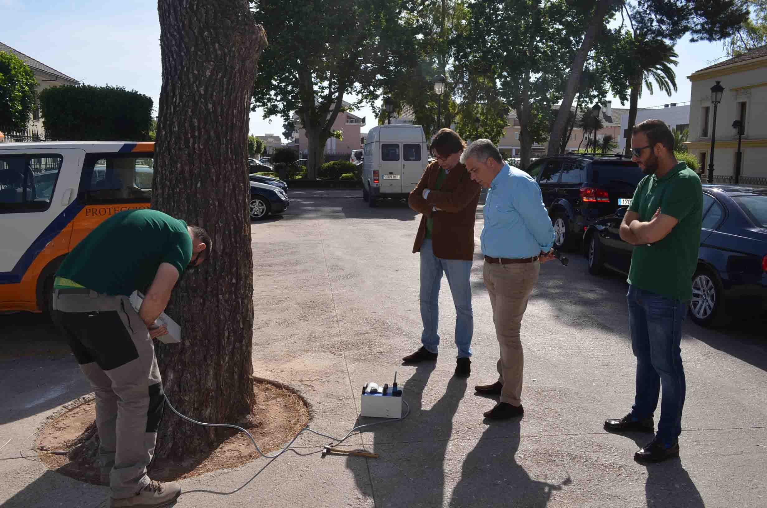 Moncada evalúa sus árboles para prevenir su caída