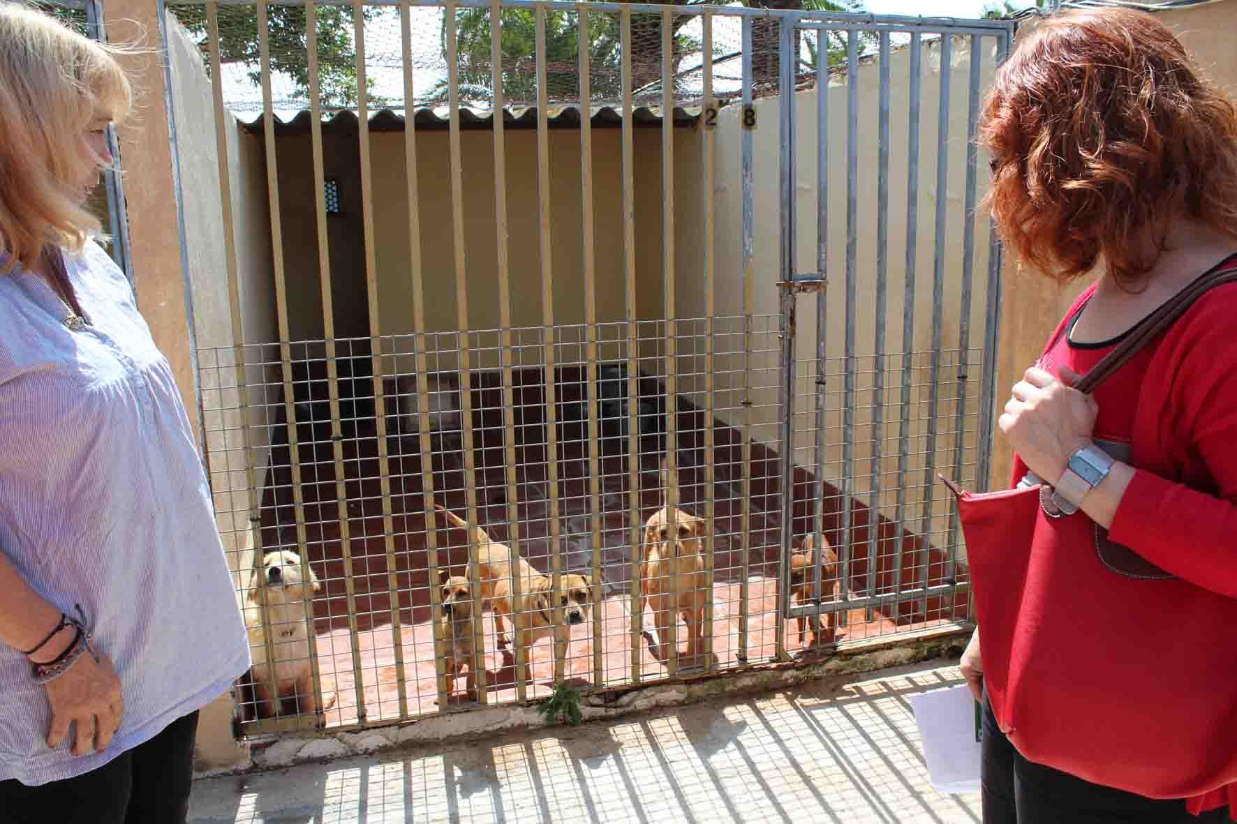 La Mancomunitat de l'Horta Sud pone en marcha el lunes su servicio de Recogida y Custodia de Animales