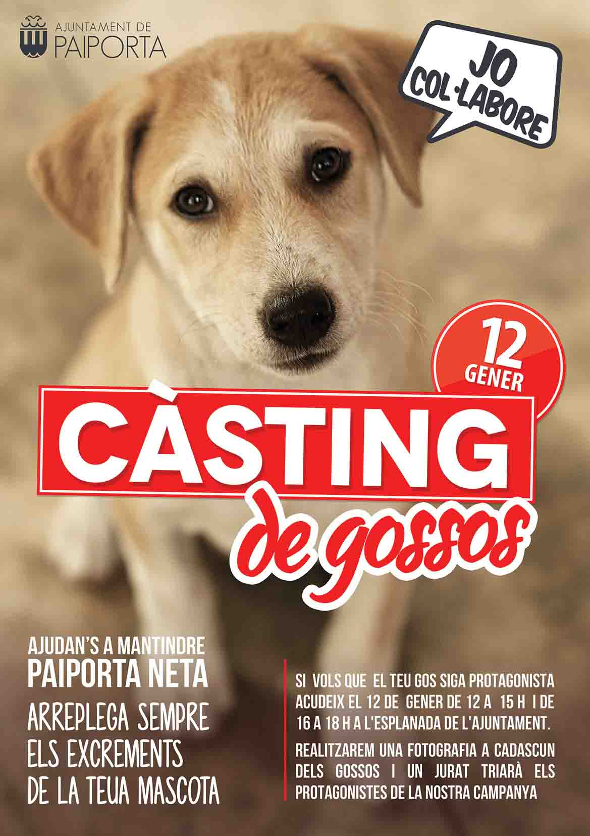 Paiporta celebra un càsting de gossos que protagonitzen la nova campanya de recollida d'excrements