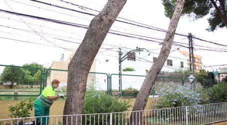 L'Ajuntament de Picassent actua contra la processionària als parcs i zones verdes del municipi