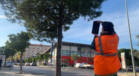Paterna realiza un inventario para geoposicionar su arbolado