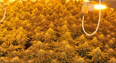 La Policía Nacional desmantela en Torrent un laboratorio de marihuana y detiene a una pareja