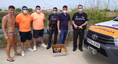 El equipo de Salvamento y Socorrismo y la Policía Local de Alboraya salvan a un polluelo de gaviota de Audouin en el barranco del Carraixet