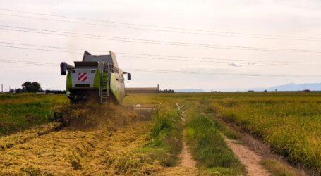 Alfafar inicia la campaña de recogida de arroz