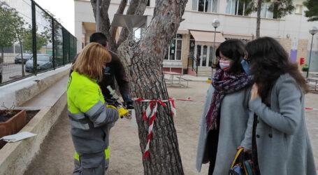 Godella comença el tractament per previndre la processionària dels pins