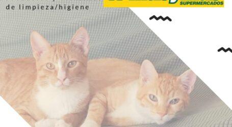 La Protectora de Animales de Burjassot organiza una nueva recogida solidaria